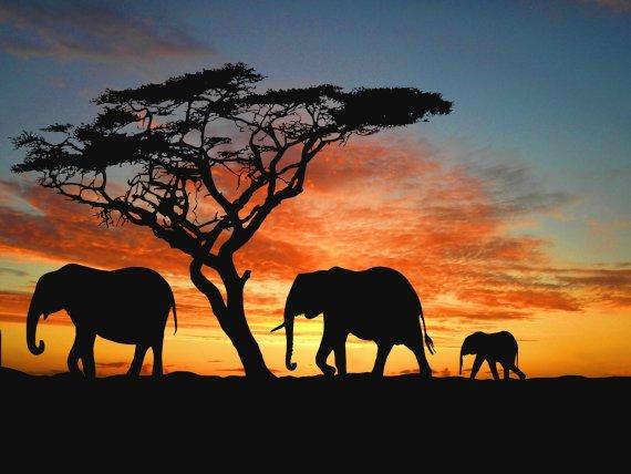 Familia de elefantes caminando al atardecer