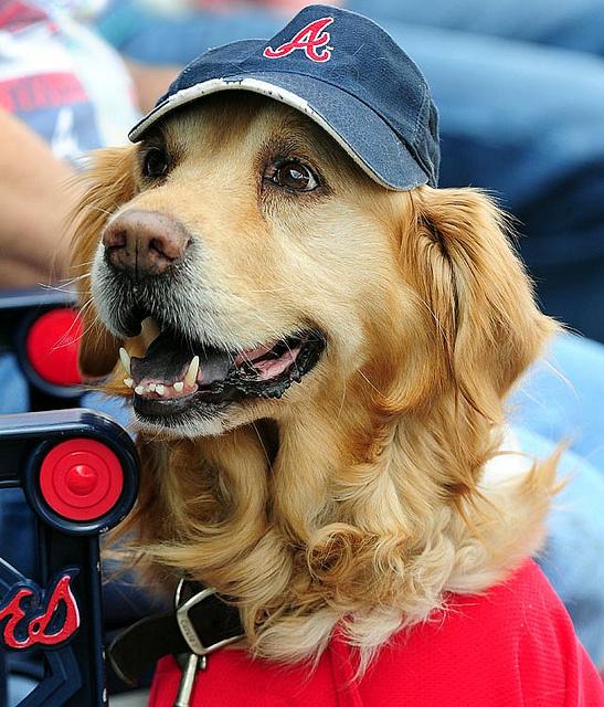 Simpatica imagen de perro deportivo