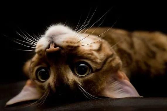 simpatico fotografia de gatito