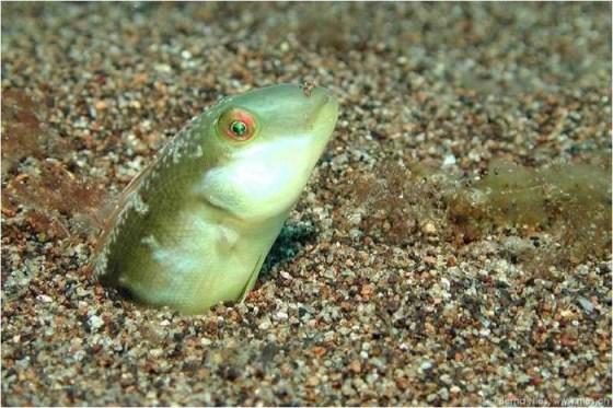 fotografias imagenes de animales marinos