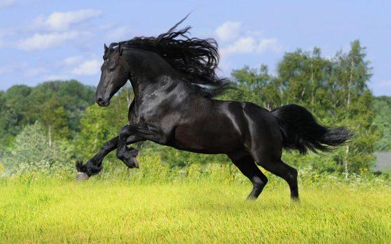 Fotografia brioso caballo negro
