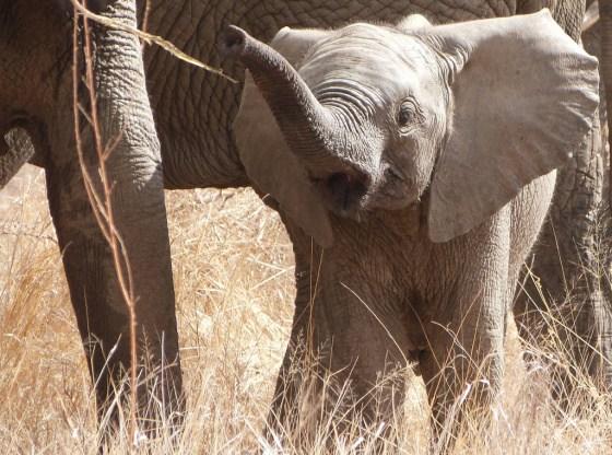 Imagen tierna de de elefantito