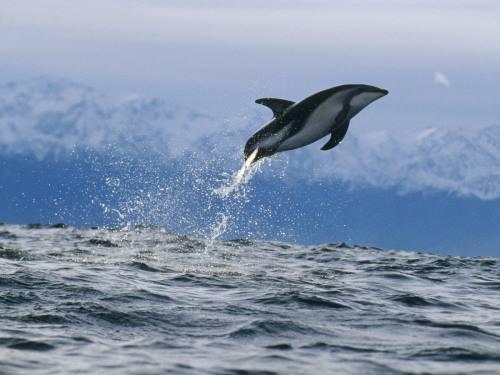 imajenes de delfines