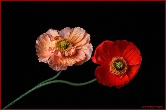 Wallpapers: imagen de flores