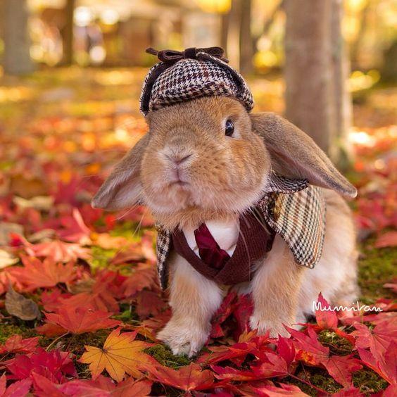 Imagen de conejito muy elegante