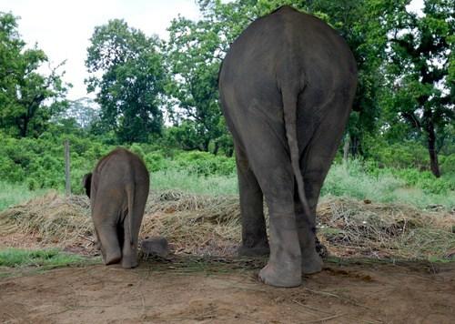 Imagenes de elefantes: elefante y su cria paseando