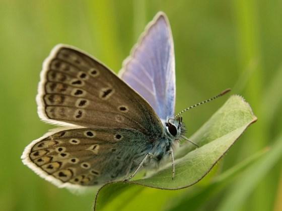 Imagen de hermosa mariposa