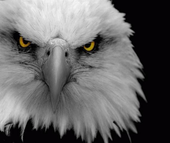 Imagenes de Aves aguilas