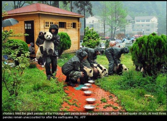 Fotografia de osos panda tomando desayuno