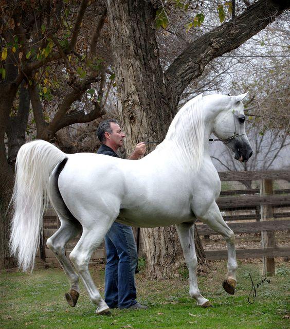 Fotografia de hermoso caballo blanco