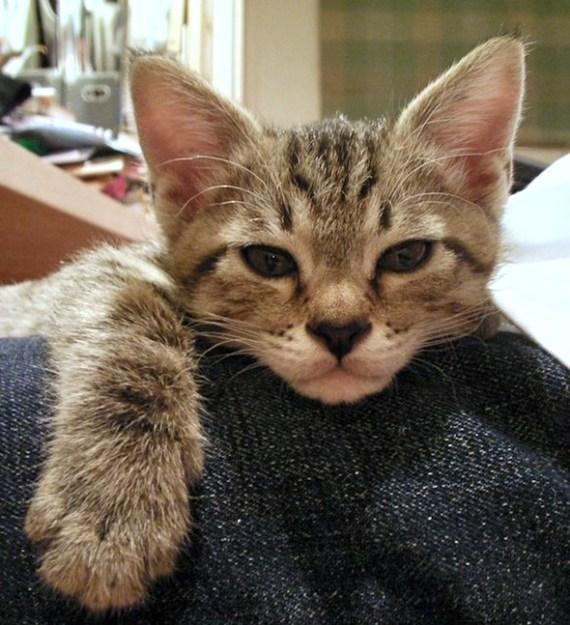 fotografia de gatito consentido