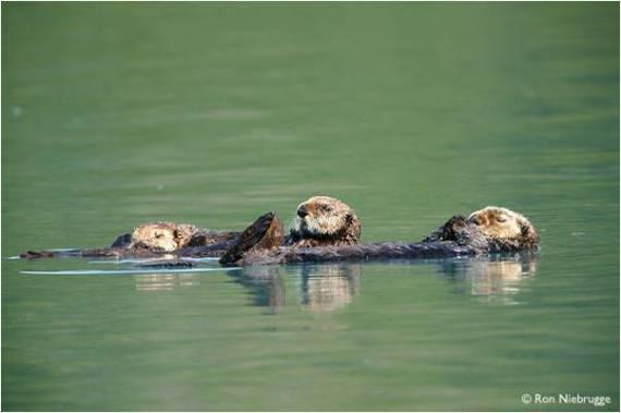 yierna imagen de animales flotando en el agua