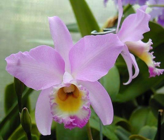 Imagenes de Flores: foto color rosa