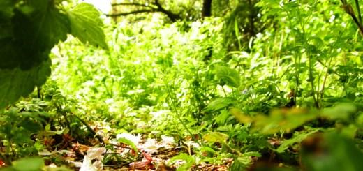 2010年5月新宿御苑にて、新緑の森