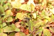 リキマシアが群生している場所の下には、蜘蛛がわらわら居たりしますw。