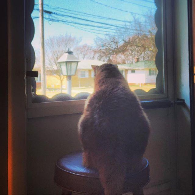 Surveying his domain