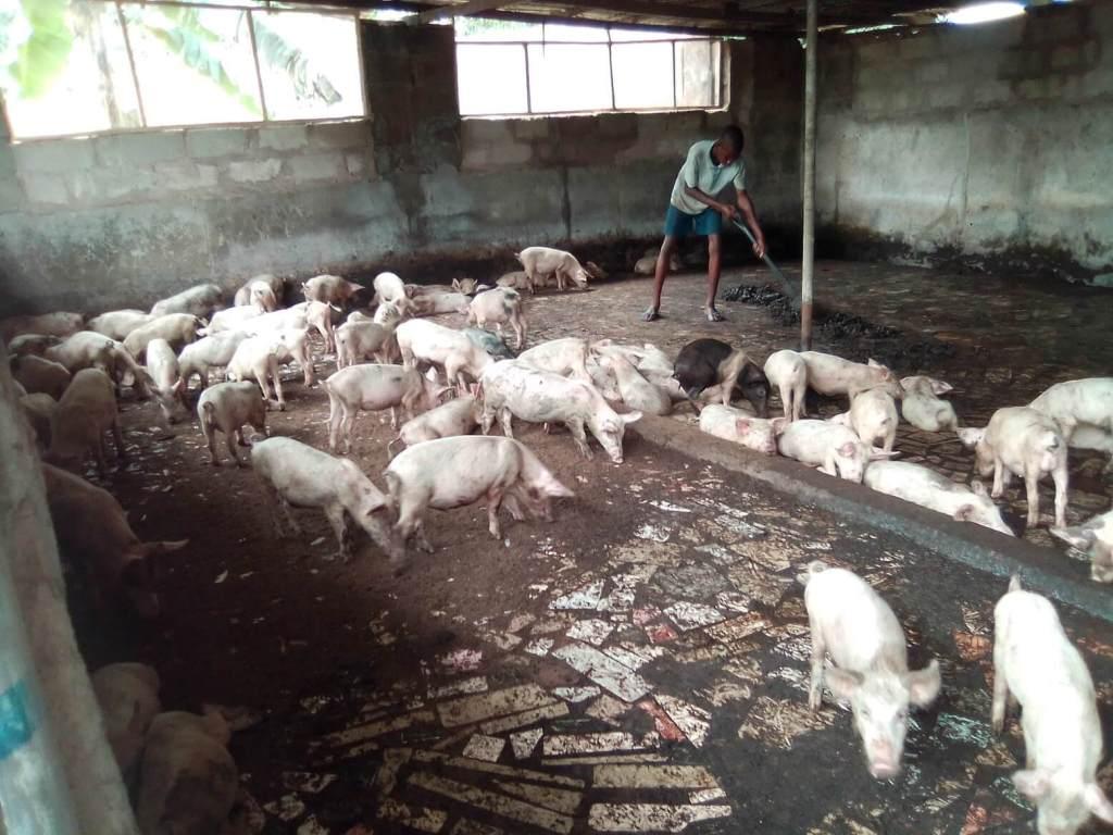 Pig Farming Business Plan (updated) 4