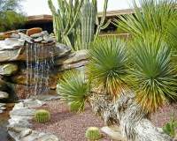 Landscaping Tucson Photo Gallery
