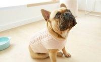 Dog Costumes & Dog Clothes
