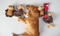 Dog Toys | Kmart
