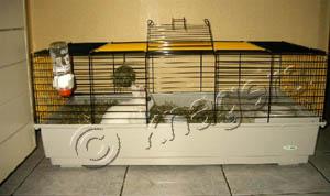 Konijnen en hamsters  konijnenhuisvesting