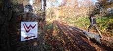Herbstwanderweg in Bad Laasphe mit Hund