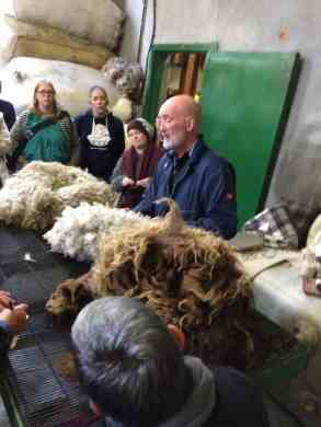 ...sorting and grading Shetland fleece