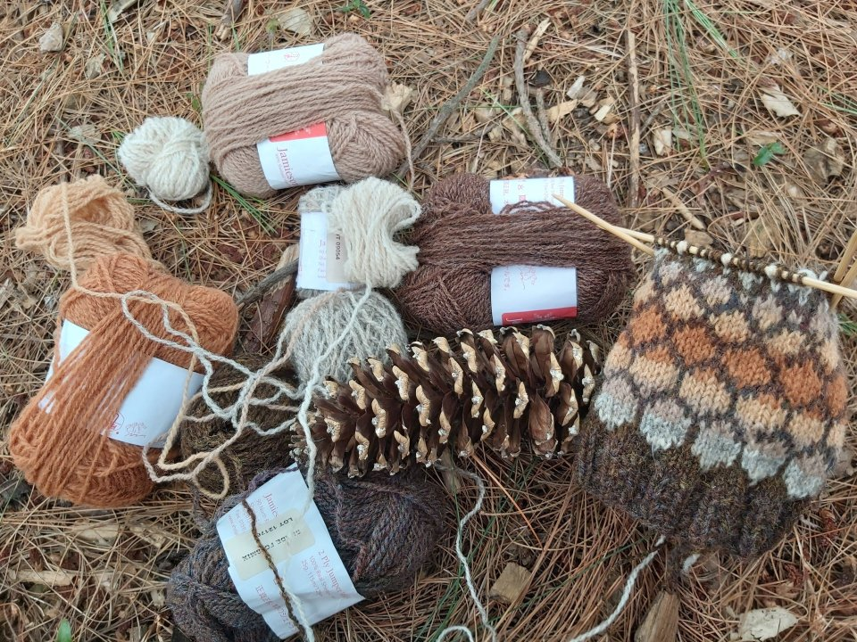 Knitting needles and yarns on the forest floor underneath the pine tree