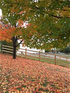 15ny_leaves_large