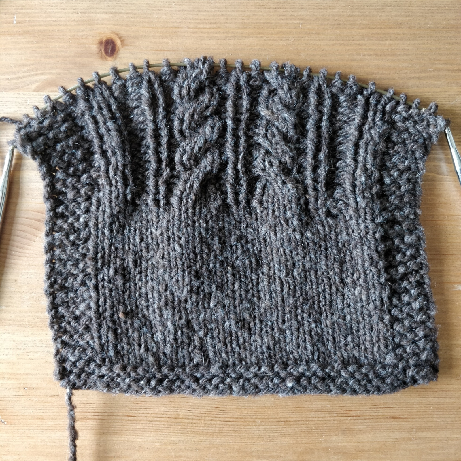 A swatch of brown knitting with plain stockinette at the bottom and cables plus ribbing at the top.