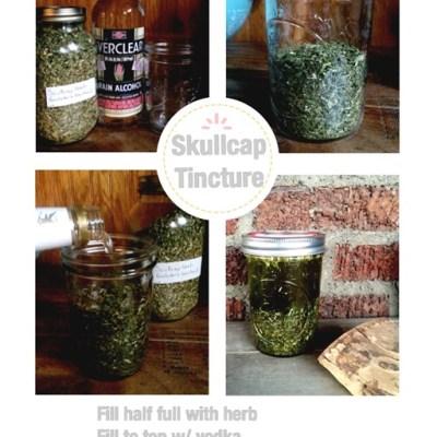Skullcap tincture and teas