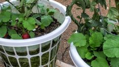 Laundry Basket Garden DIY – İDEAS