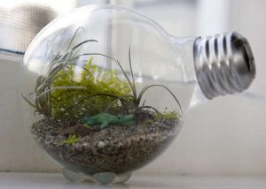 making-a-flower-pot-out-of-light-bulb-3