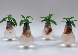 making-a-flower-pot-out-of-light-bulb-5