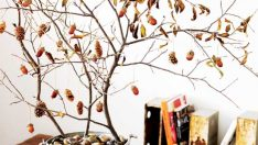 DIY Projects From Tree Branches
