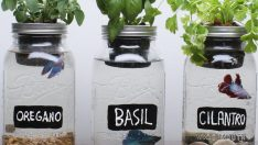 DIY Self-Fertilizing Aquarium Planters
