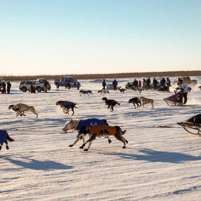 Sled dog teams