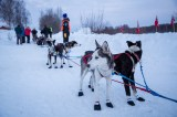 Charley Bejna's sled dogs