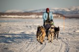 Martin Buser arrives into Unalakleet, Saturday evening