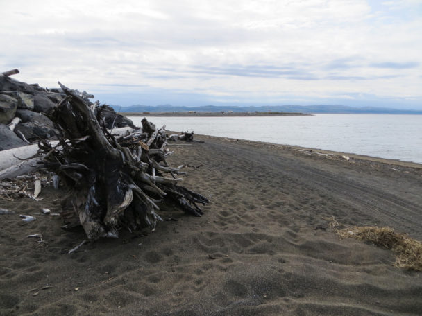 Driftwood on the Unalakleet Beach. (Photo: Maddie Winchester, KNOM)