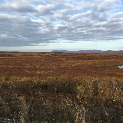 Fall tundra in Nome. Photo: Margaret DeMaioribus, KNOM.