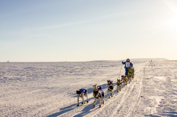 An Iditarod musher nears the outskirts of Nome, just a few miles from the finish line.