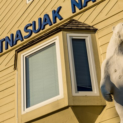 Polar bear in front of Sitnasuak Native Corporation building in Nome.