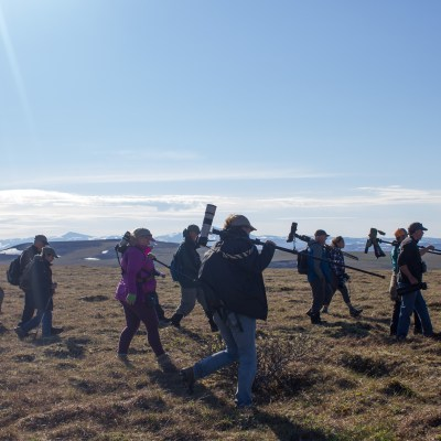 A group of birders in pursuit of the bristle-thighed curlew.
