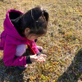 A young girl examines a crowberry with a hand lens in Shishmaref.