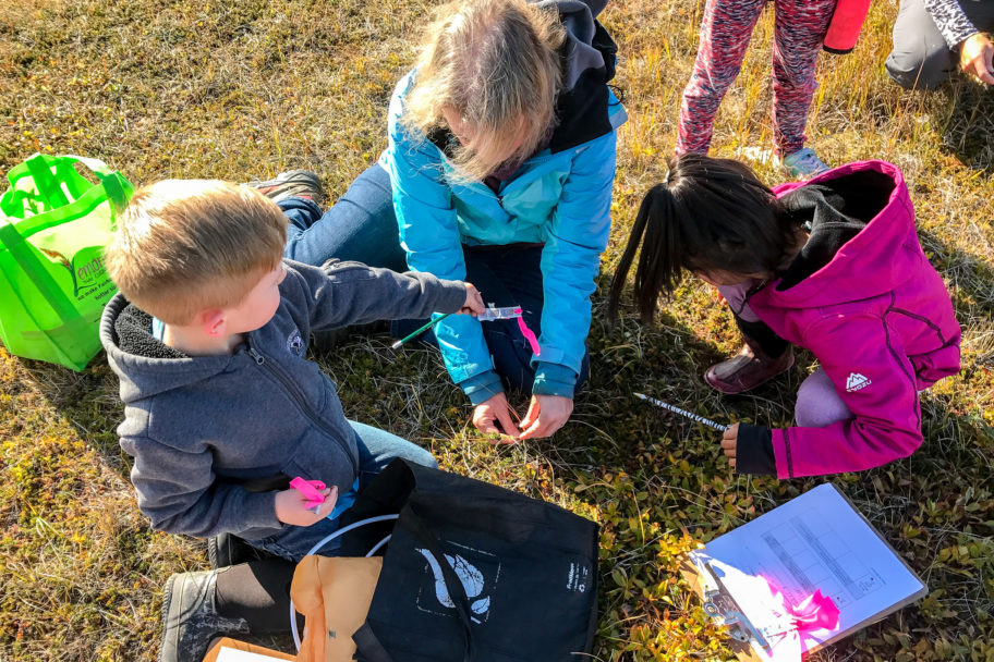 Students examine small berry plants outdoors