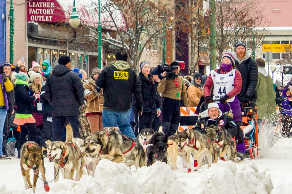 Woman in purple parka mushes sled dog team down a snowy street in Anchorage.