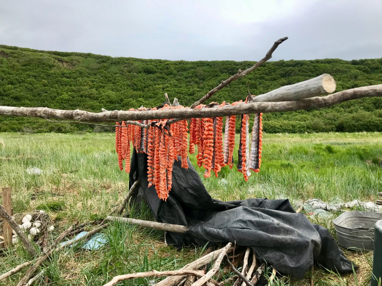 Recently-cut salmon hangs out to dry near the Stebbins beach (Photo: Gabe Colombo, KNOM)