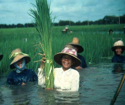 Bildergebnis für deepwater rice