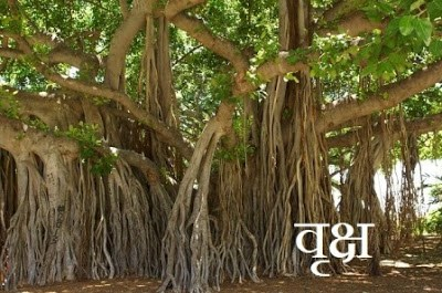 Information About Trees In Hindi